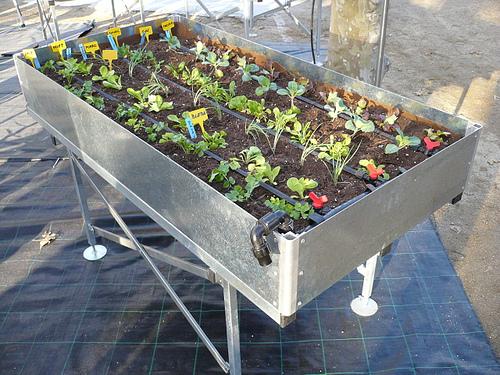 Granja en casa verdura miel setas insectos y for Cultivar vegetales en casa
